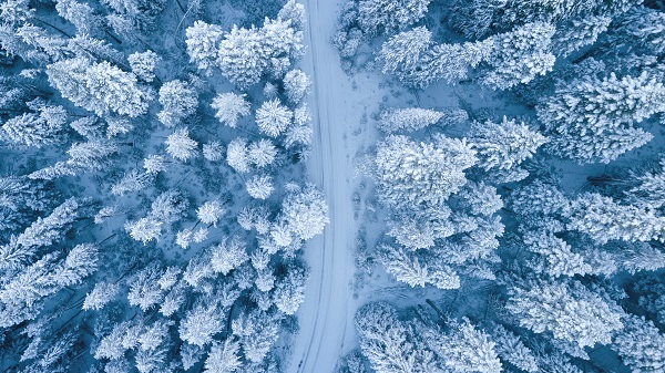 pexels-nature-winter-cold-snow-trees-overhead-road-ice-resized